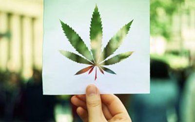 La hora del cannabis